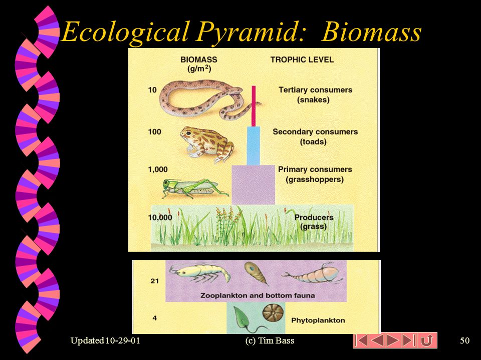 Updated (c) Tim Bass49 1,000, ,000 10,000 Next Screen Ecological Pyramid: Biomass