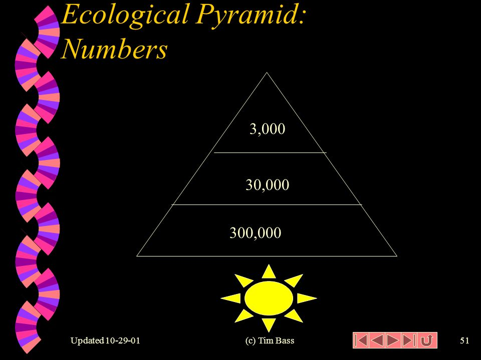 Updated (c) Tim Bass50 Ecological Pyramid: Biomass