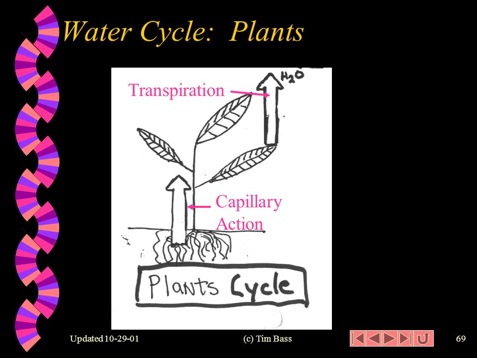 Updated (c) Tim Bass68 Water Cycle: Plants w Transpiration: the evaporation of water from the leaves of plants.