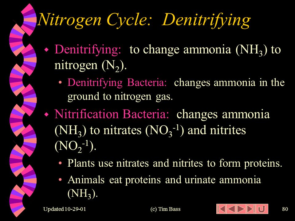 Updated (c) Tim Bass79 Nitrogen Cycle: Nitrogen Fixing Denitrifying Bacteria