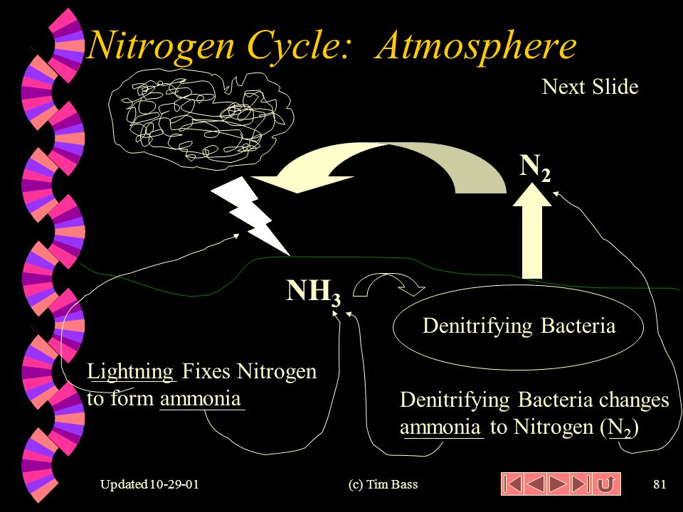 Updated (c) Tim Bass80 Nitrogen Cycle: Denitrifying w Denitrifying: to change ammonia (NH 3 ) to nitrogen (N 2 ).