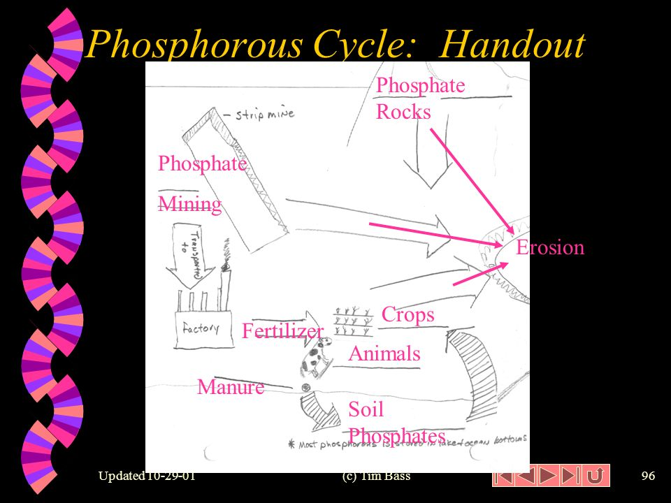 Updated (c) Tim Bass95 Phosphorous Cycle: Diagram 3