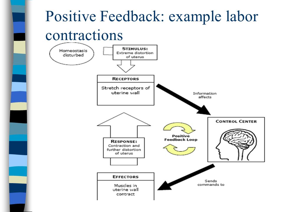 Positive Feedback: example labor contractions