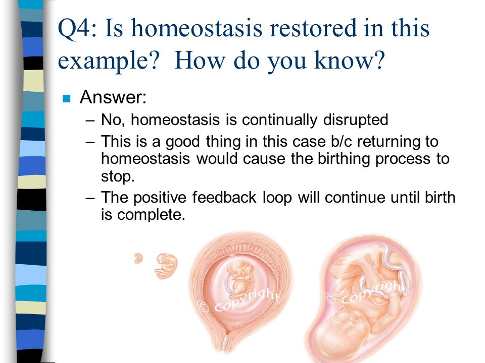 Q4: Is homeostasis restored in this example. How do you know.