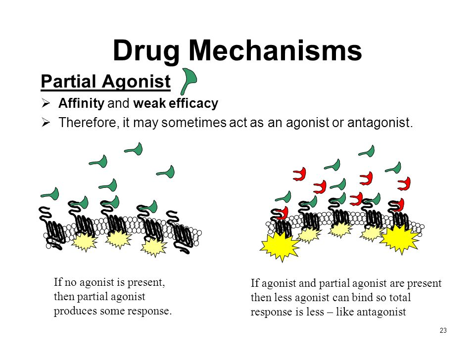 23 Partial Agonist Affinity and weak efficacy Therefore, it may sometimes act as an agonist or antagonist. If no agonist is present, then partial agon