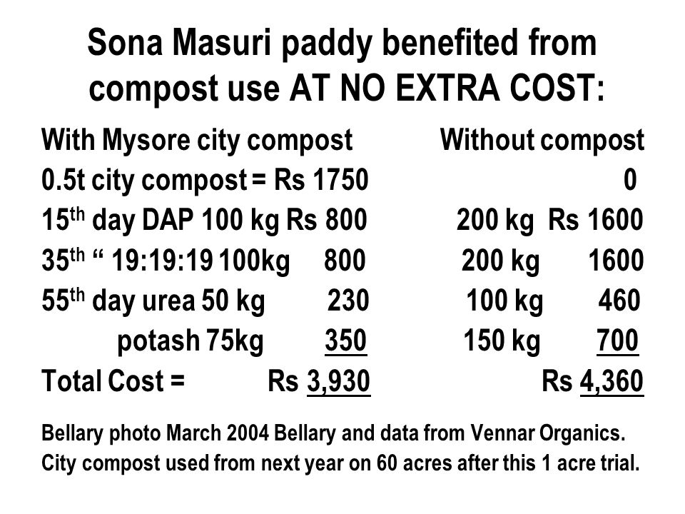 Sona Masuri paddy benefited from compost use AT NO EXTRA COST: With Mysore city compost Without compost 0.5t city compost = Rs 1750 0 15 th day DAP 100 kg Rs 800 200 kg Rs 1600 35 th 19:19:19 100kg 800 200 kg 1600 55 th day urea 50 kg 230 100 kg 460 potash 75kg 350 150 kg 700 Total Cost = Rs 3,930 Rs 4,360 Bellary photo March 2004 Bellary and data from Vennar Organics.