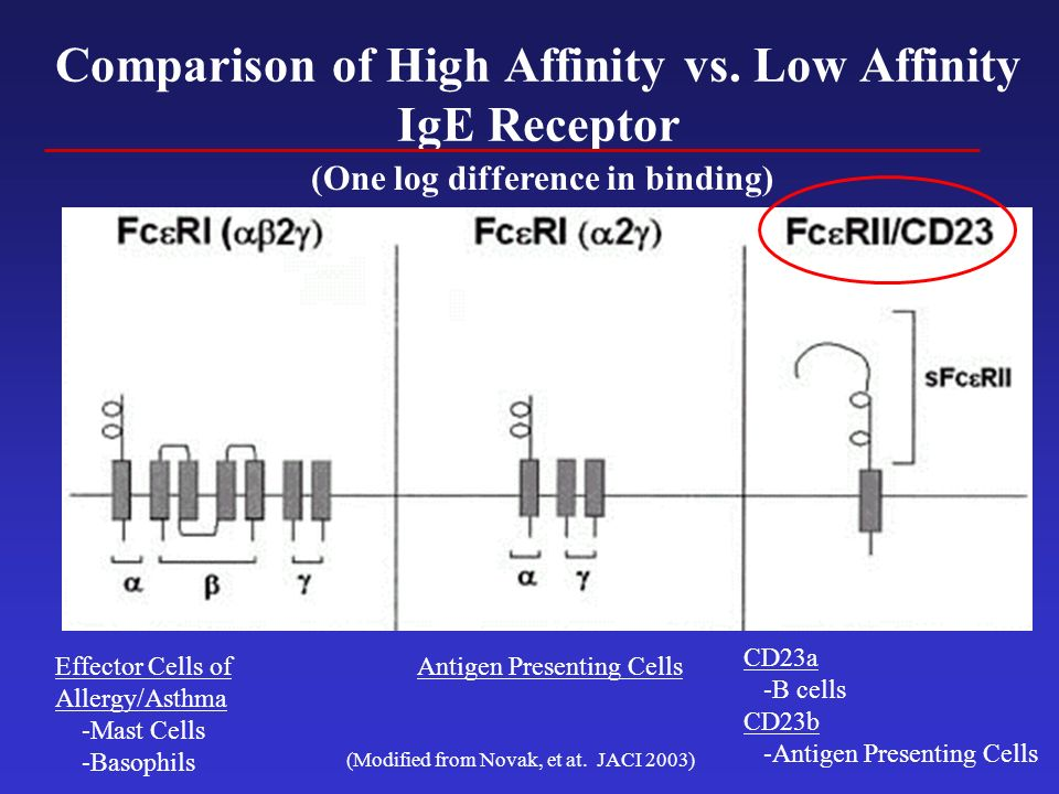 Comparison of High Affinity vs. Low Affinity IgE Receptor (Modified from Novak, et at. JACI 2003) Effector Cells of Allergy/Asthma -Mast Cells -Basoph