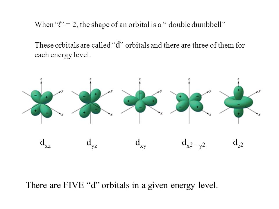 d xz d yz d xy d x 2 – y 2 dz2dz2 When l = 2, the shape of an orbital is a double dumbbell These orbitals are called d orbitals and there are three of