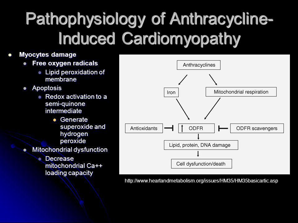 Pathophysiology of Anthracycline- Induced Cardiomyopathy Myocytes damage Myocytes damage Free oxygen radicals Free oxygen radicals Lipid peroxidation
