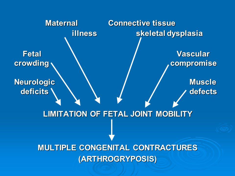 Maternal Connective tissue illness skeletal dysplasia Maternal Connective tissue illness skeletal dysplasia Fetal Vascular Fetal Vascular crowding com