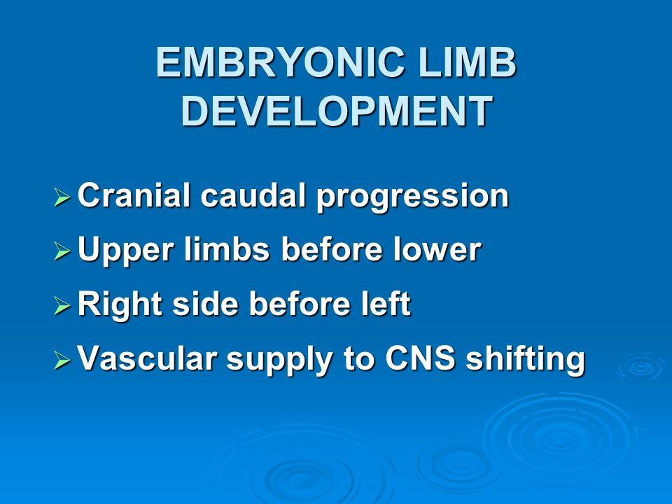 EMBRYONIC LIMB DEVELOPMENT Cranial caudal progression Cranial caudal progression Upper limbs before lower Upper limbs before lower Right side before l