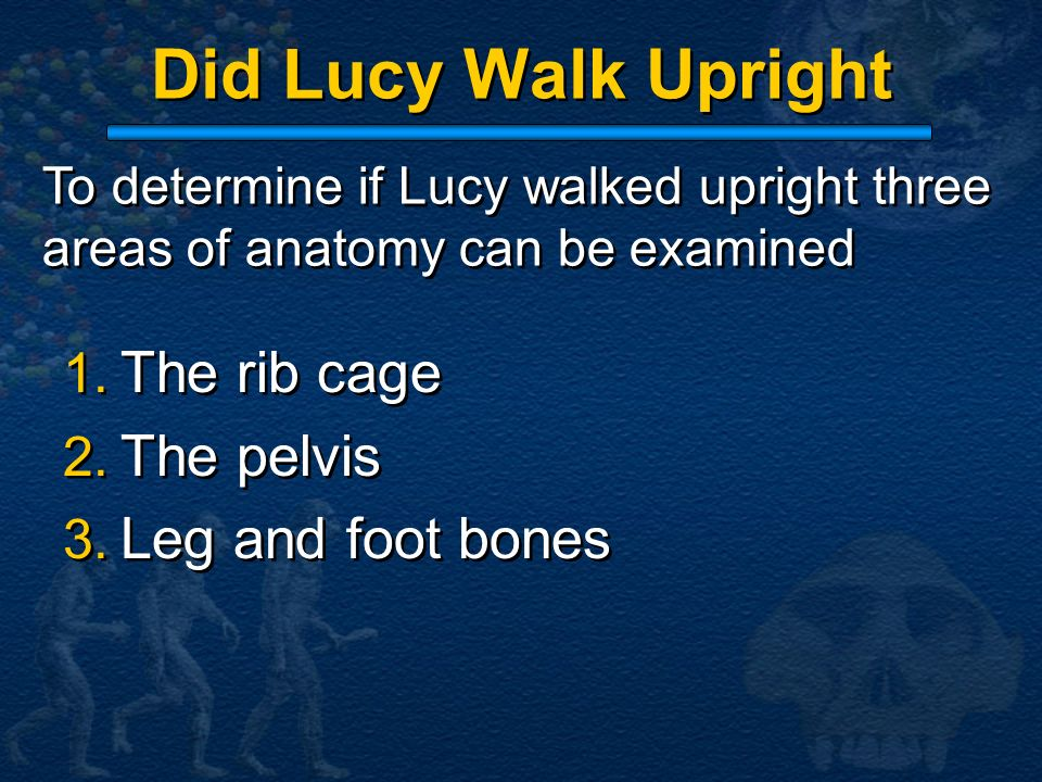 Did Lucy Walk Upright 1. The rib cage 2. The pelvis 3. Leg and foot bones 1. The rib cage 2. The pelvis 3. Leg and foot bones To determine if Lucy wal
