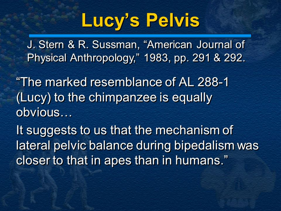 Lucys Pelvis The marked resemblance of AL 288-1 (Lucy) to the chimpanzee is equally obvious… It suggests to us that the mechanism of lateral pelvic ba