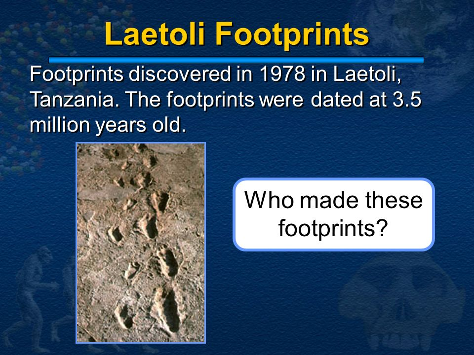 Laetoli Footprints Footprints discovered in 1978 in Laetoli, Tanzania. The footprints were dated at 3.5 million years old. Who made these footprints?