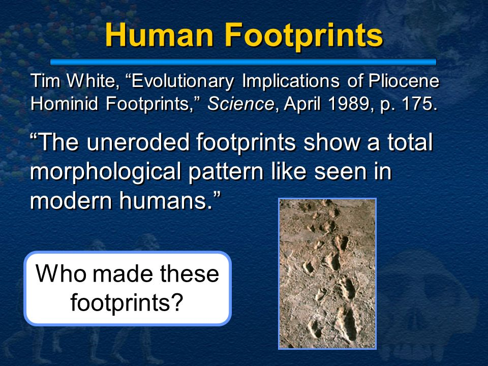 Human Footprints The uneroded footprints show a total morphological pattern like seen in modern humans. Tim White, Evolutionary Implications of Plioce