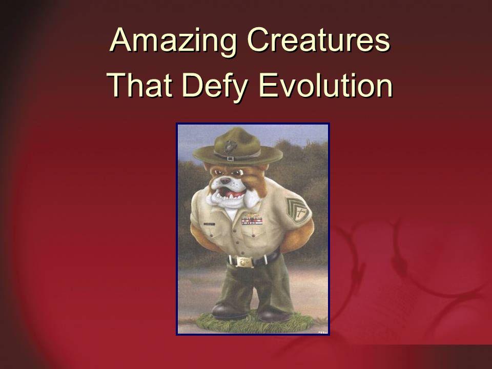 Amazing Creatures That Defy Evolution Amazing Creatures That Defy Evolution