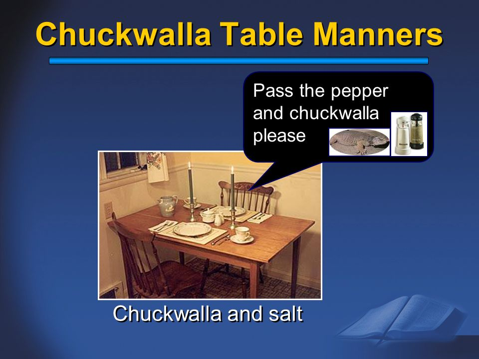 Chuckwalla Table Manners Chuckwalla and salt Pass the pepper and chuckwalla please