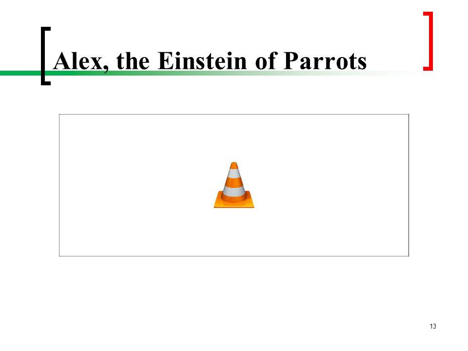 Alex, the Einstein of Parrots 13