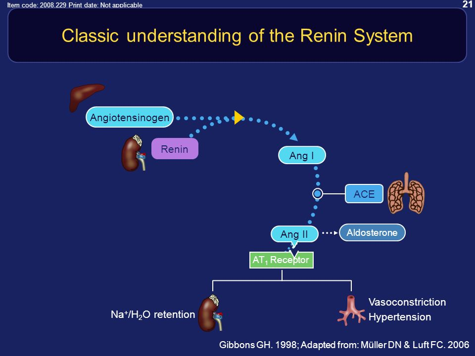 21 Item code: 2008.229 Print date: Not applicable Classic understanding of the Renin System Gibbons GH.