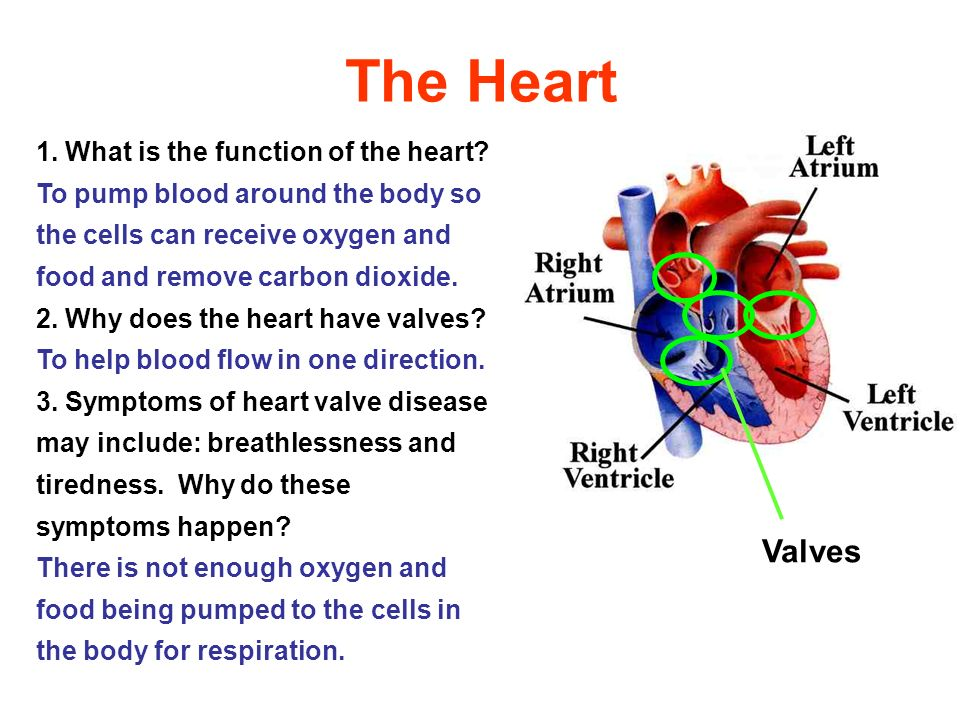 The Heart Valves 1. What is the function of the heart? To pump blood around the body so the cells can receive oxygen and food and remove carbon dioxid