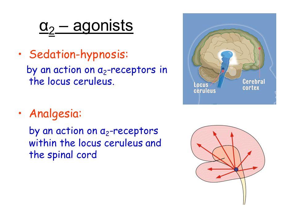 α 2 – agonists Sedation-hypnosis: by an action on α 2 -receptors in the locus ceruleus. Analgesia: by an action on α 2 -receptors within the locus cer
