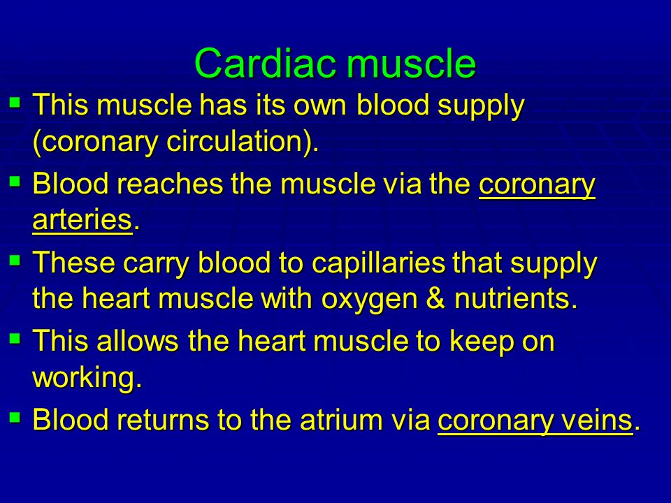 Cardiac muscle This muscle has its own blood supply (coronary circulation). This muscle has its own blood supply (coronary circulation). Blood reaches