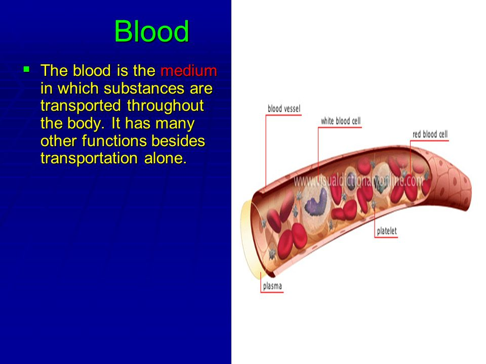 Blood The blood is the medium in which substances are transported throughout the body. It has many other functions besides transportation alone. The b