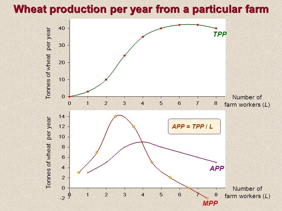 Wheat production per year from a particular farm Tonnes of wheat per year TPP Tonnes of wheat per year APP MPP APP = TPP / L Number of farm workers (L) Number of farm workers (L)