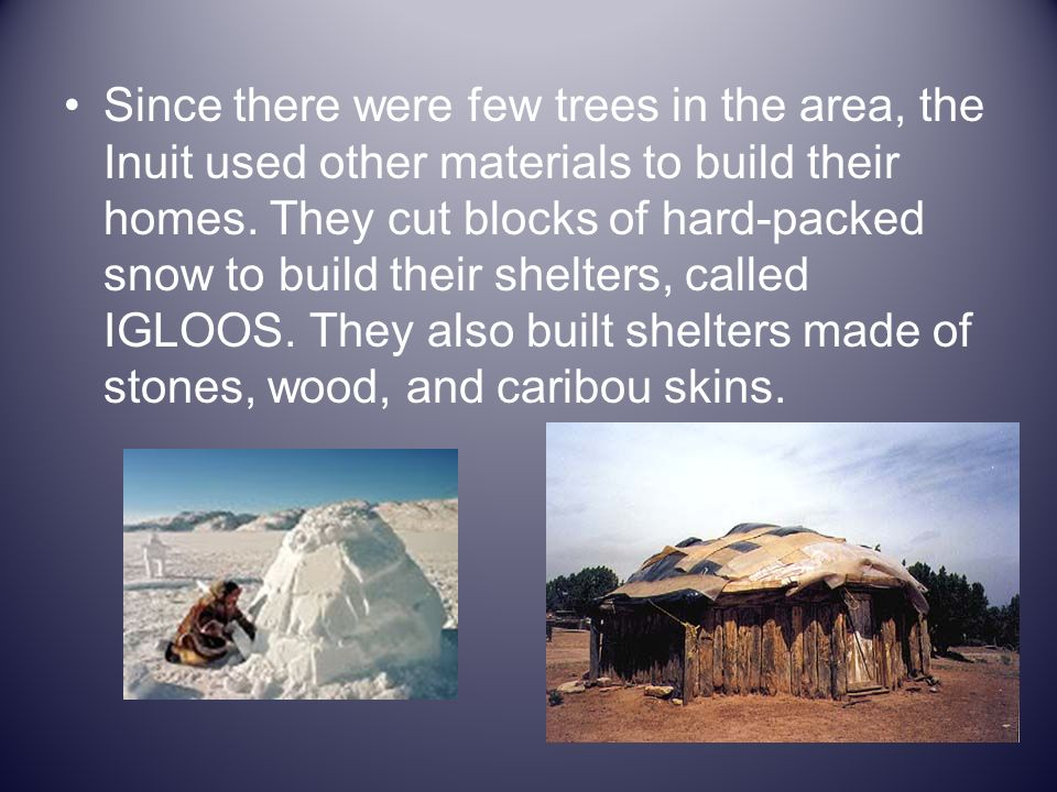 Since there were few trees in the area, the Inuit used other materials to build their homes. They cut blocks of hard-packed snow to build their shelte