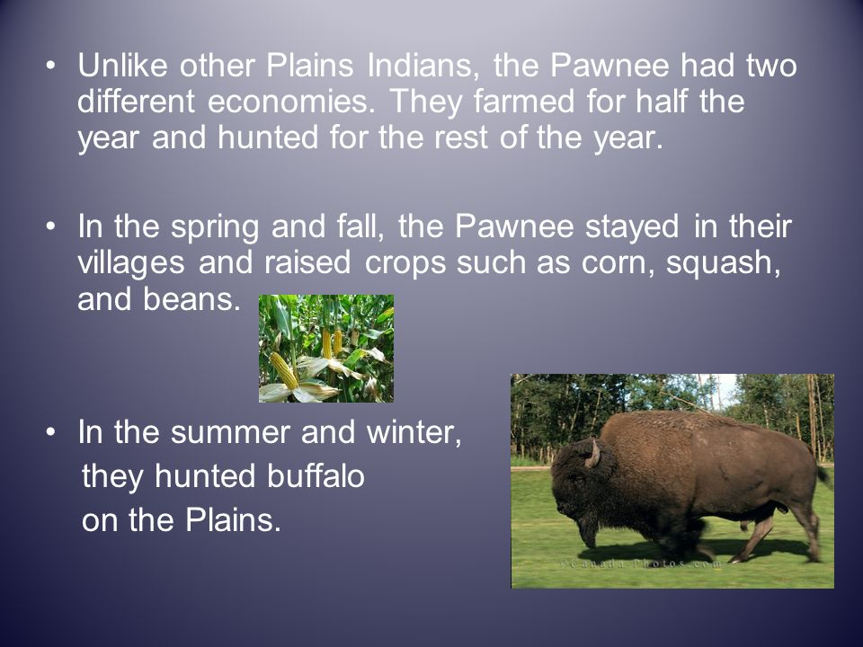 Unlike other Plains Indians, the Pawnee had two different economies. They farmed for half the year and hunted for the rest of the year. In the spring