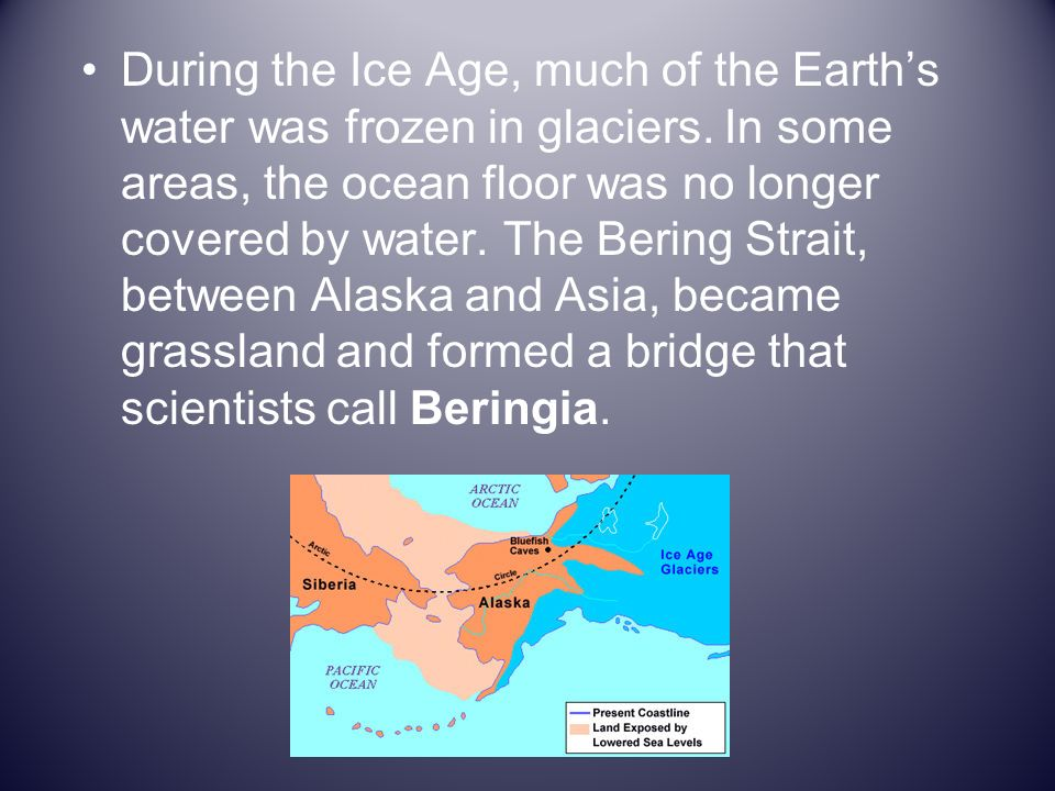 Humans hunted the animals that lived in the Beringia.