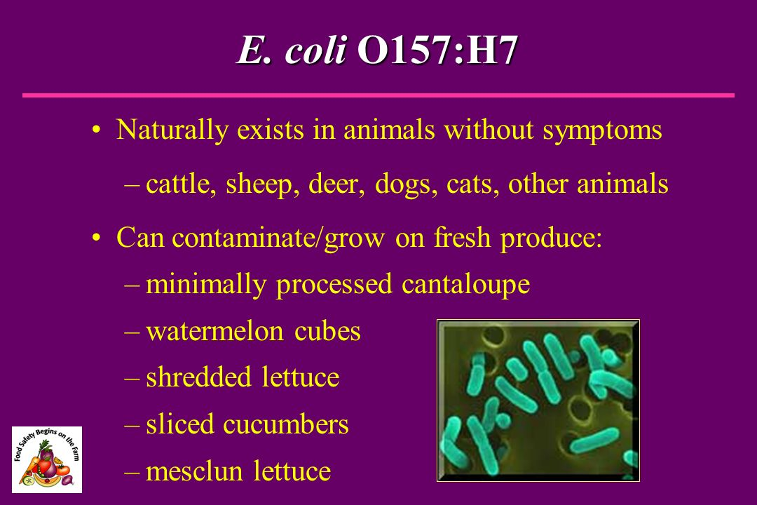 E. coli O157:H7 Naturally exists in animals without symptoms –cattle, sheep, deer, dogs, cats, other animals Can contaminate/grow on fresh produce: –m