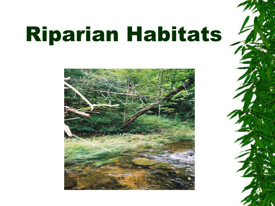 Riparian Habitats