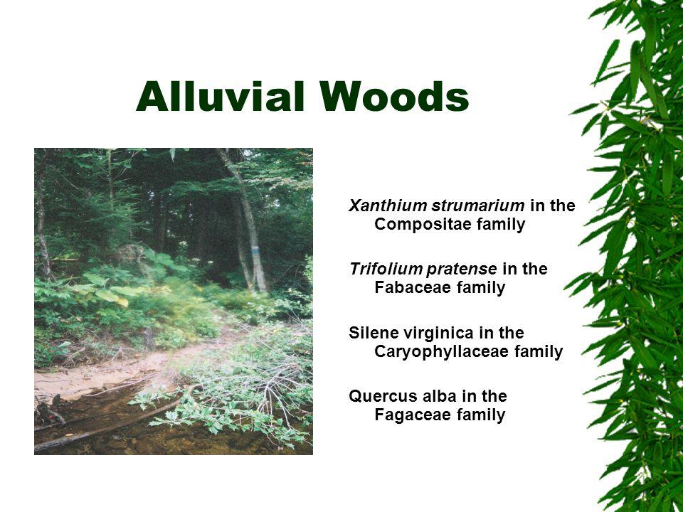 Alluvial Woods Xanthium strumarium in the Compositae family Trifolium pratense in the Fabaceae family Silene virginica in the Caryophyllaceae family Quercus alba in the Fagaceae family