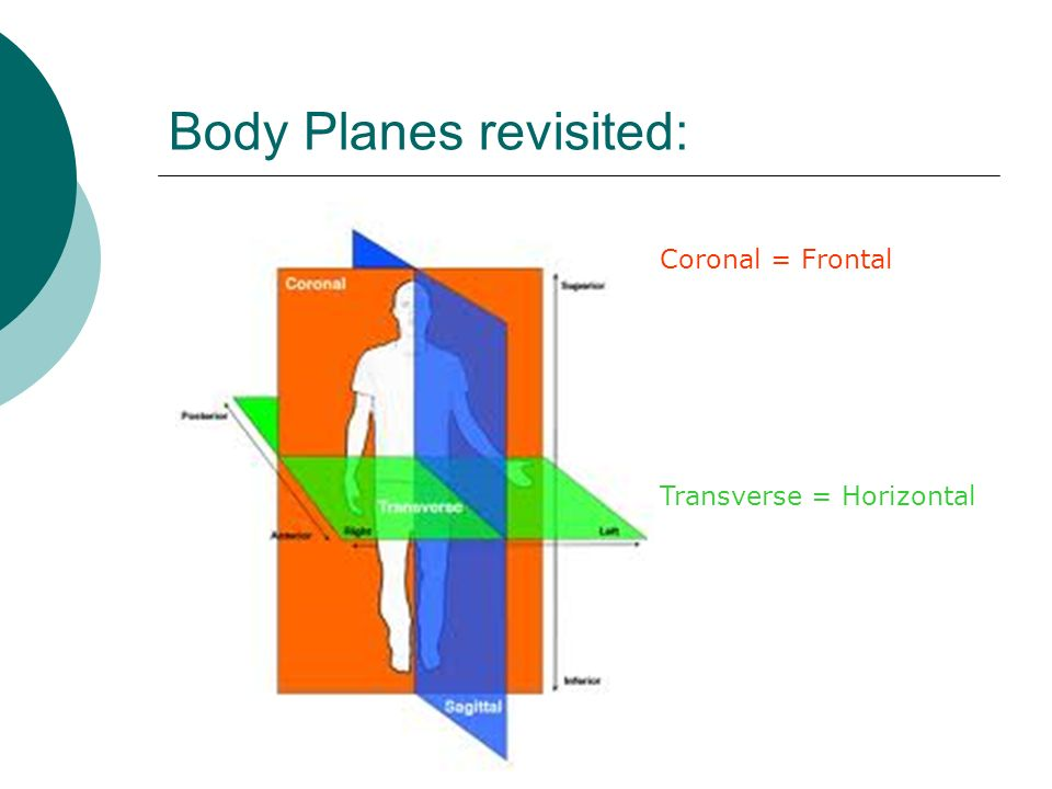 Body Planes revisited: Coronal = Frontal Transverse = Horizontal