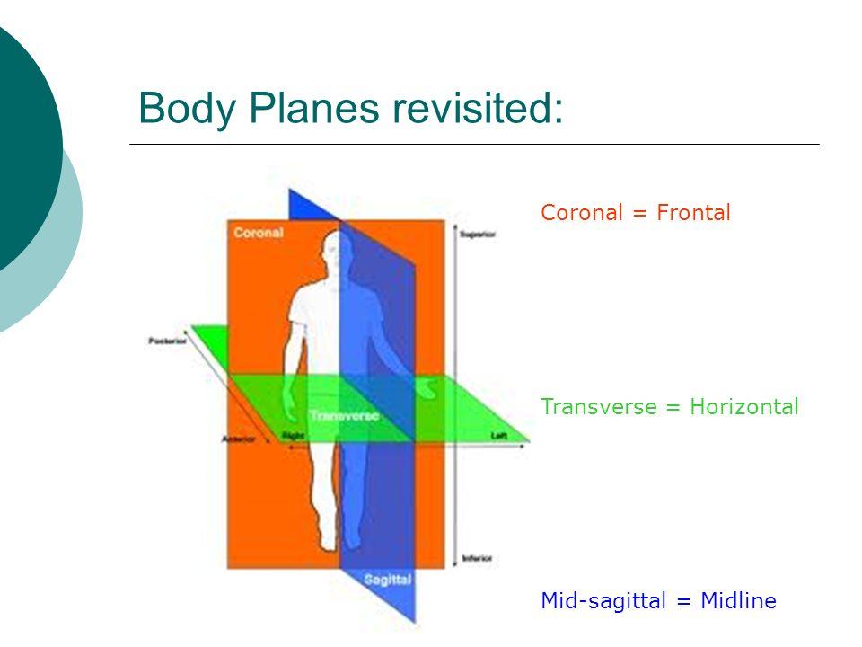 Body Planes revisited: Coronal = Frontal Transverse = Horizontal Mid-sagittal = Midline