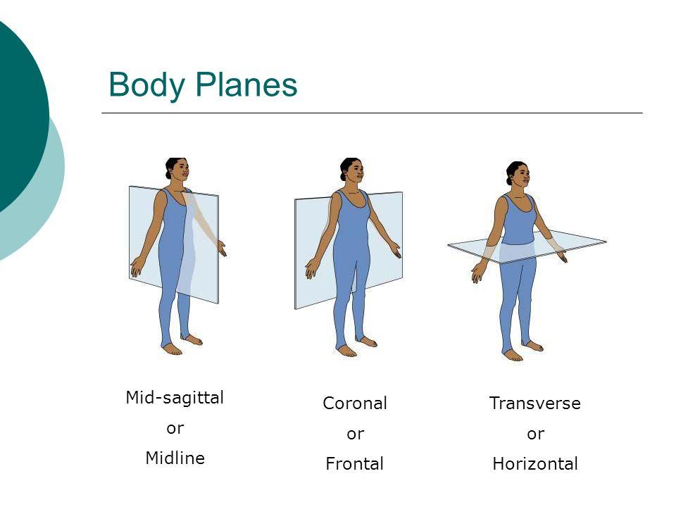 Body Planes Mid-sagittal or Midline Coronal or Frontal Transverse or Horizontal
