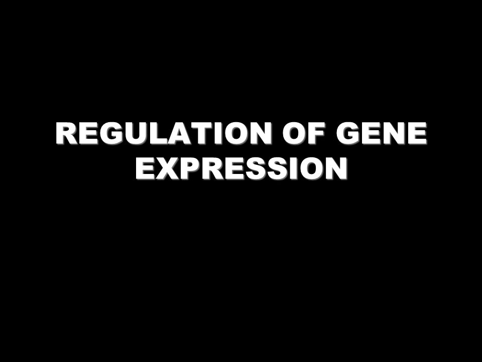 WHY REGULATE GENE EXPRESSION?? Adaptation (Energy Conservation) Development and differentiation