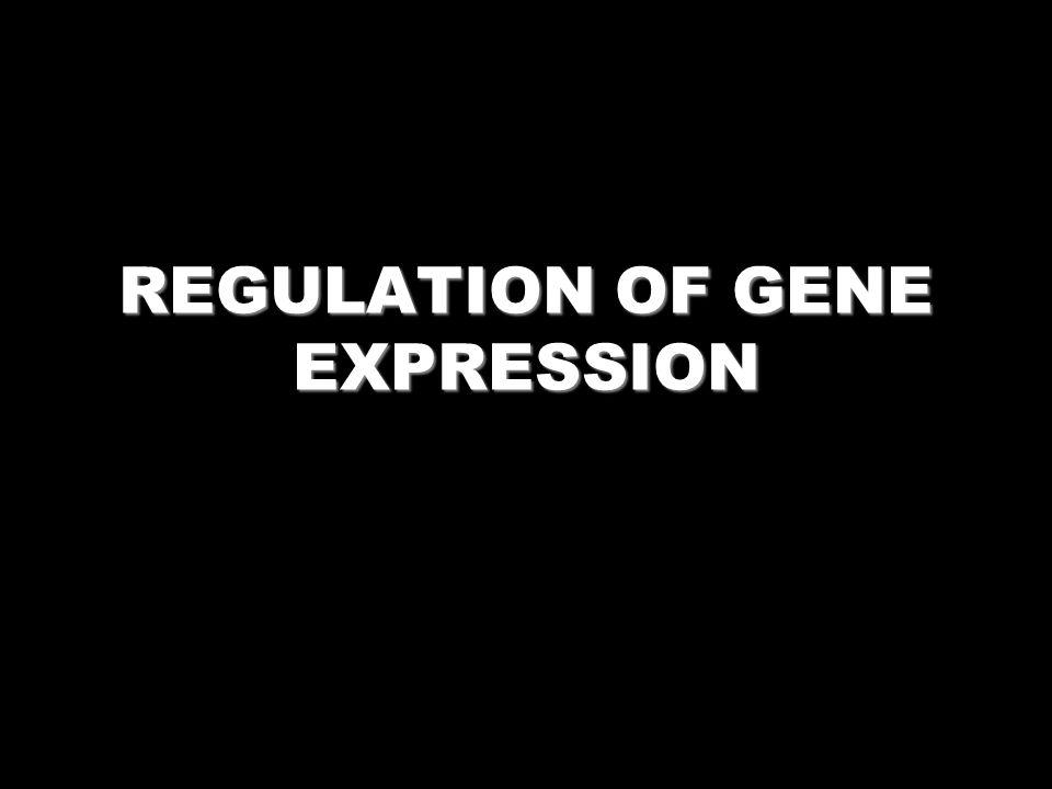cAMP Response Element (CRE) 5- TGACGTCA -3 3- ACTGCAGT -5