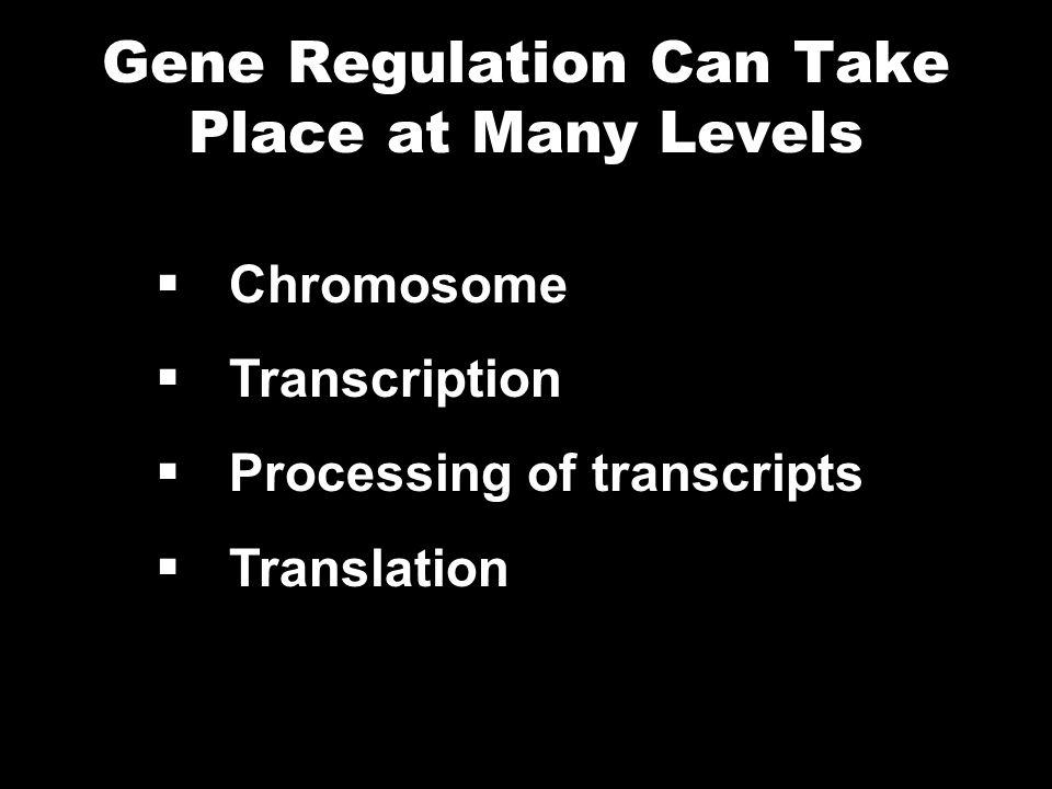 Gene Regulation Can Take Place at Many Levels Chromosome Transcription Processing of transcripts Translation