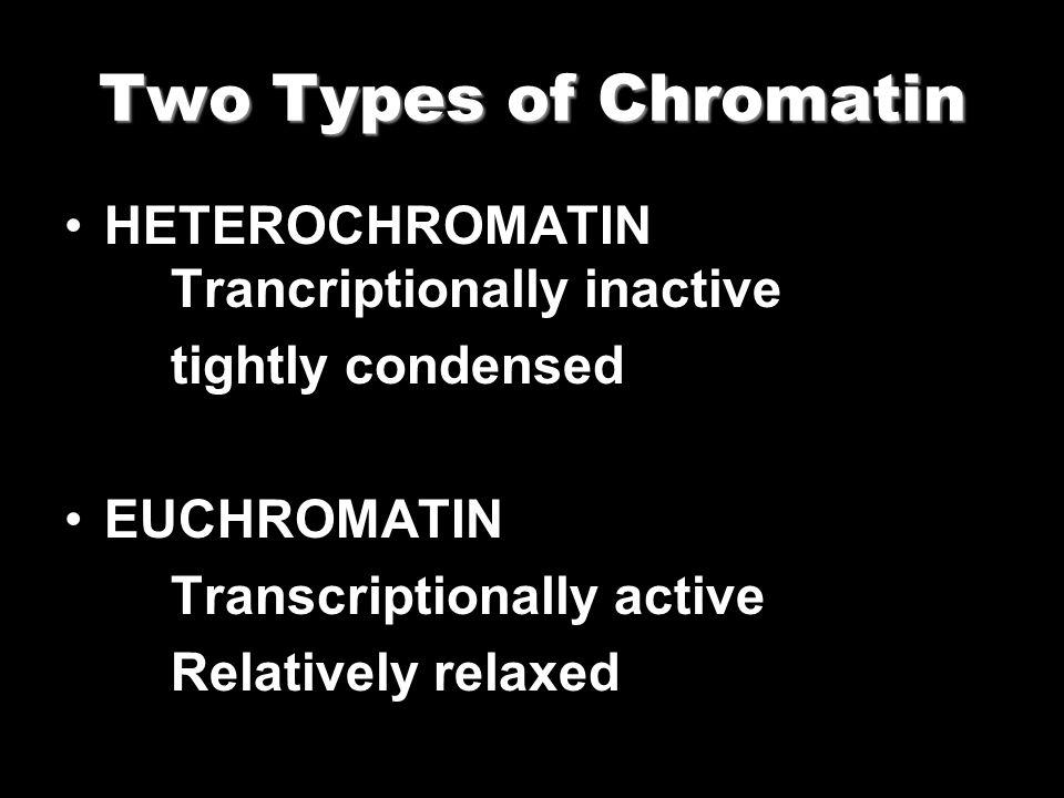 Two Types of Chromatin HETEROCHROMATIN Trancriptionally inactive tightly condensed EUCHROMATIN Transcriptionally active Relatively relaxed