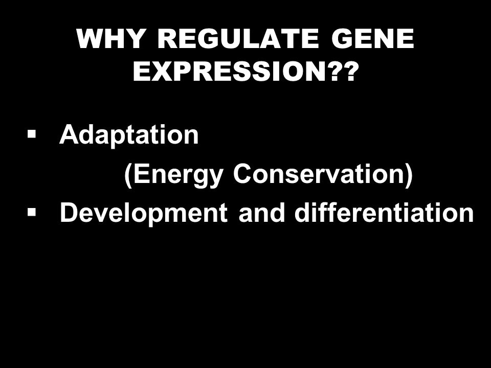 Regulation of ferritin expression