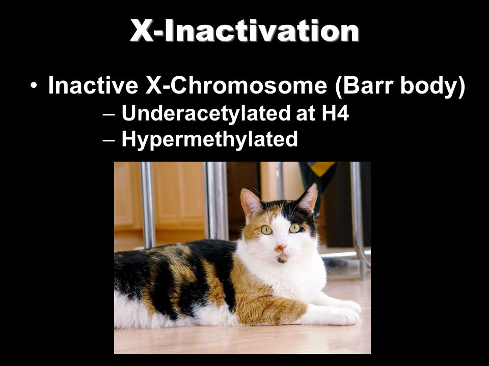 X-Inactivation Inactive X-Chromosome (Barr body) – Underacetylated at H4 – Hypermethylated