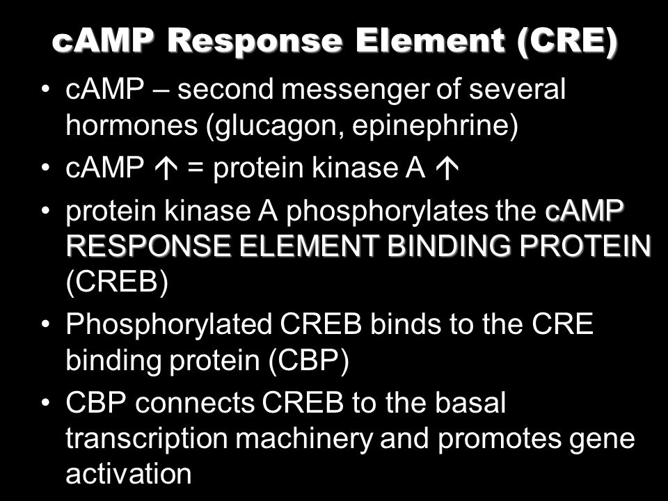 cAMP – second messenger of several hormones (glucagon, epinephrine) cAMP = protein kinase A cAMP RESPONSE ELEMENT BINDING PROTEINprotein kinase A phos