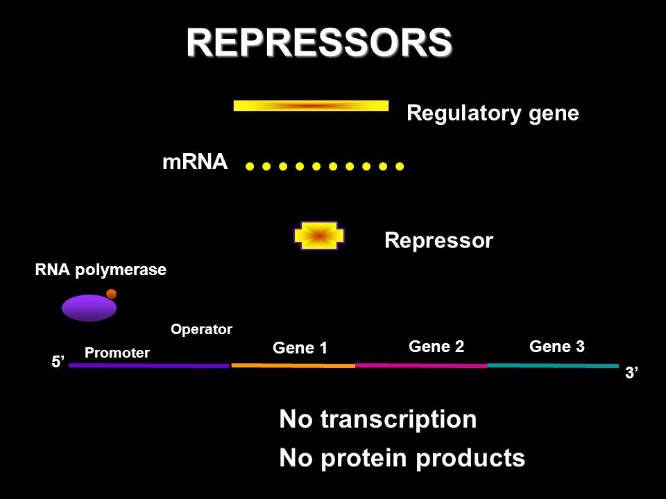 REGULATORY MECHANISMS INDUCTION Repressor is INACTIVATED through inducers to INITIATE / INDUCE transcription REPRESSION Repressor is ACTIVATED through corepressors to PREVENT / REPRESS transcription