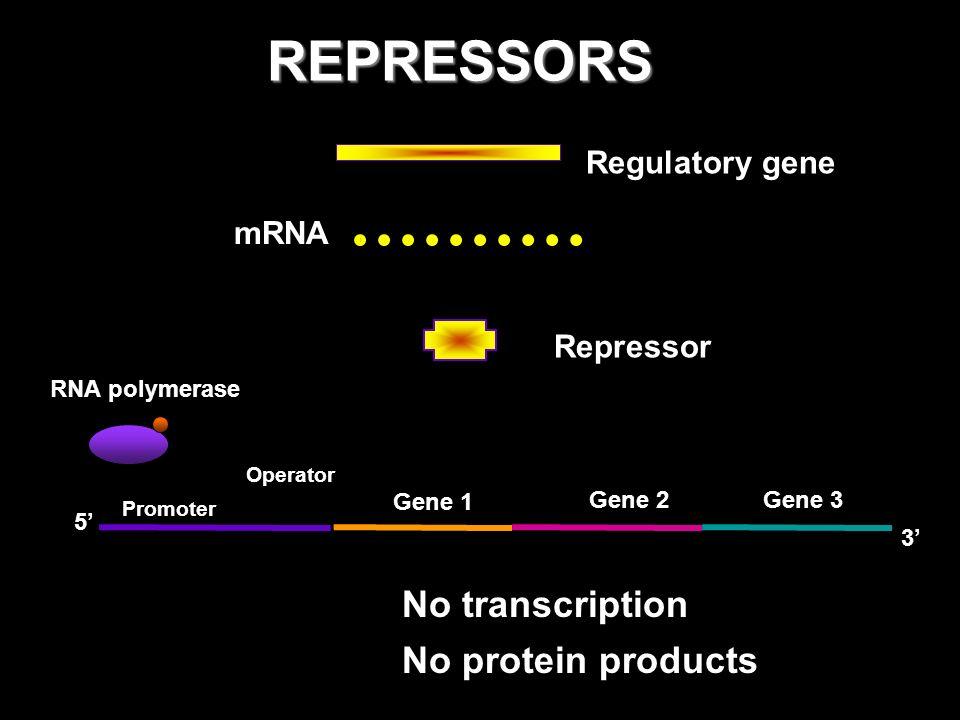 GTFs only produce a basal level of transcription i.e.
