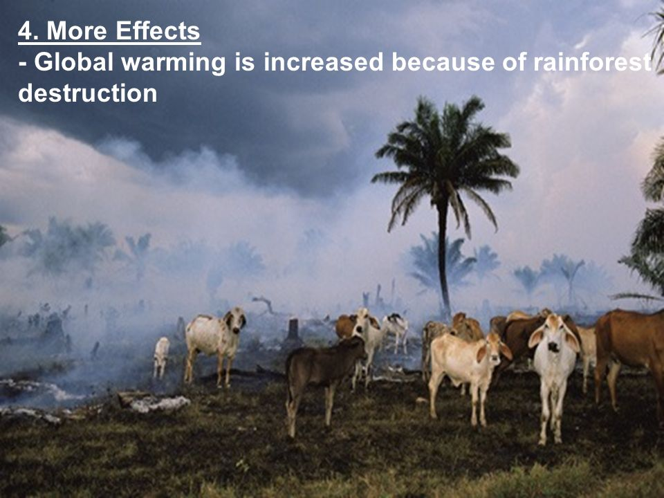 4. More Effects - Global warming is increased because of rainforest destruction
