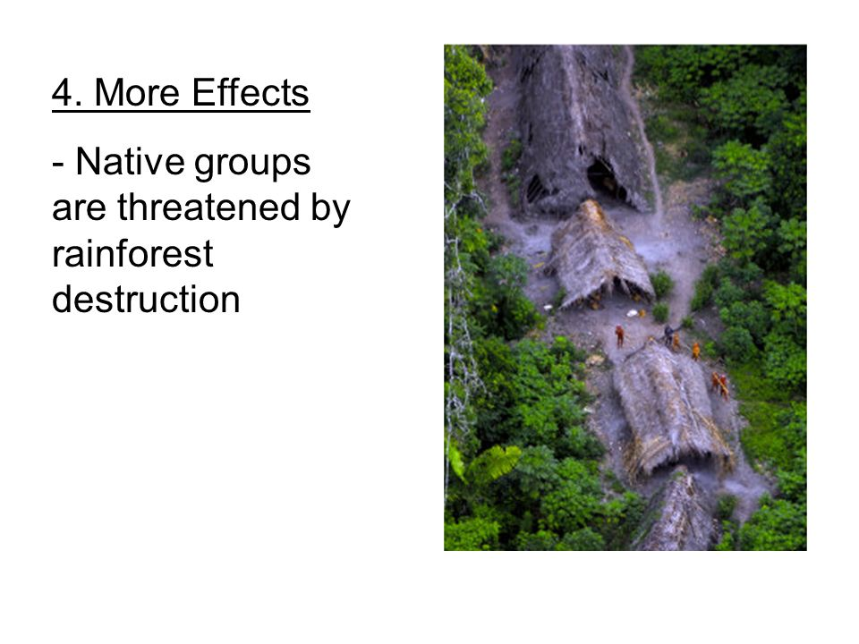 4. More Effects - Native groups are threatened by rainforest destruction