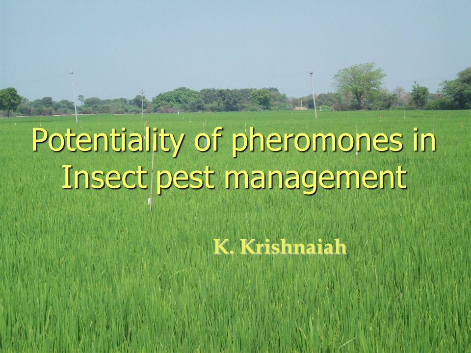 Potentiality of pheromones in Insect pest management K. Krishnaiah