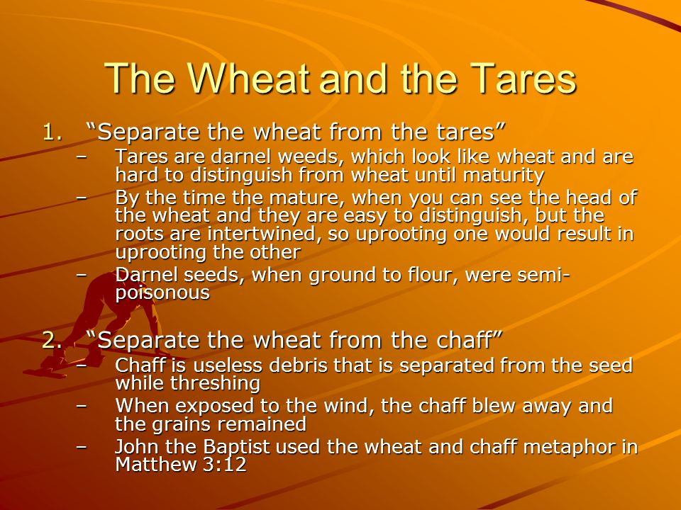 The Wheat and the Tares 1.Separate the wheat from the tares –Tares are darnel weeds, which look like wheat and are hard to distinguish from wheat unti